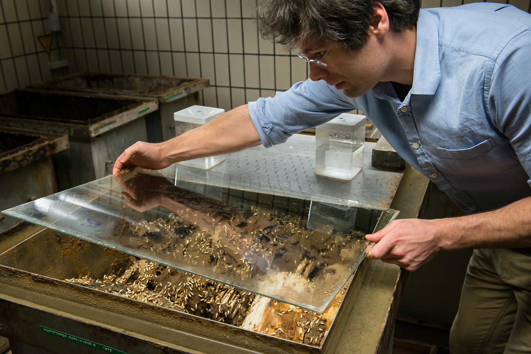 "Dino McMahon's stock of termites at BAM is ""probably the best in the world""."