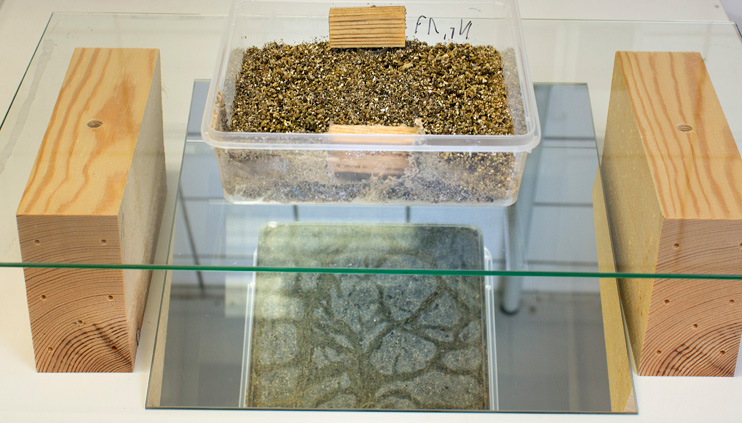 An experiment set-up with two wood samples in a transparent termite breeding container. The structure stands on a glass plate and is reflected from below, so that the creatures' behaviour can be observed during the test.