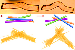 Schematic depiction of the spaghetti model for the bending of the coordination polymer crystal