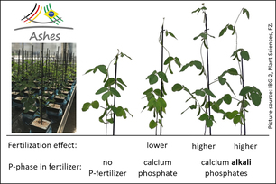 Soybean plants from plant growth experiments at Forschungszentrum Jülich