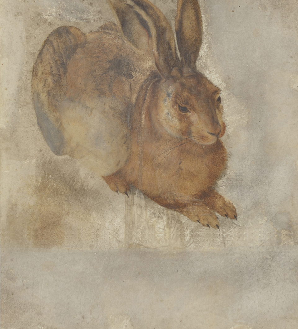 """Young Hare"" (after Albrecht Dürer), detail, Klassik Stiftung Weimar, inv. No.: 507379, current condition of the drawing"